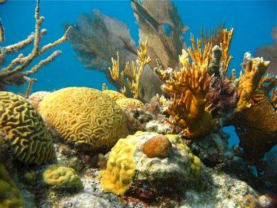 Bermudan Reef (Photo by W. Martindale)