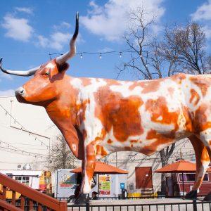 Local Experts Austin Places That Keep Austin Weird