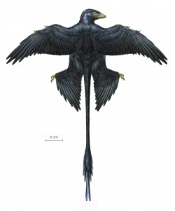 Microraptor Reconstruction #5