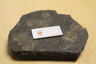 Ammonite With Fossils Img 8597