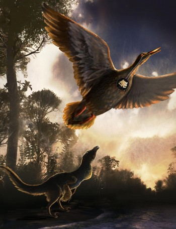 In a Nothofagus forest on the shoreline of Vega Island, Antarctica, a mid-sized raptor dinosaur is shown using close-mouth vocal behavior and Vegavis iaai is flying overhead. Nicole Fuller/Sayo Art for UT Austin.