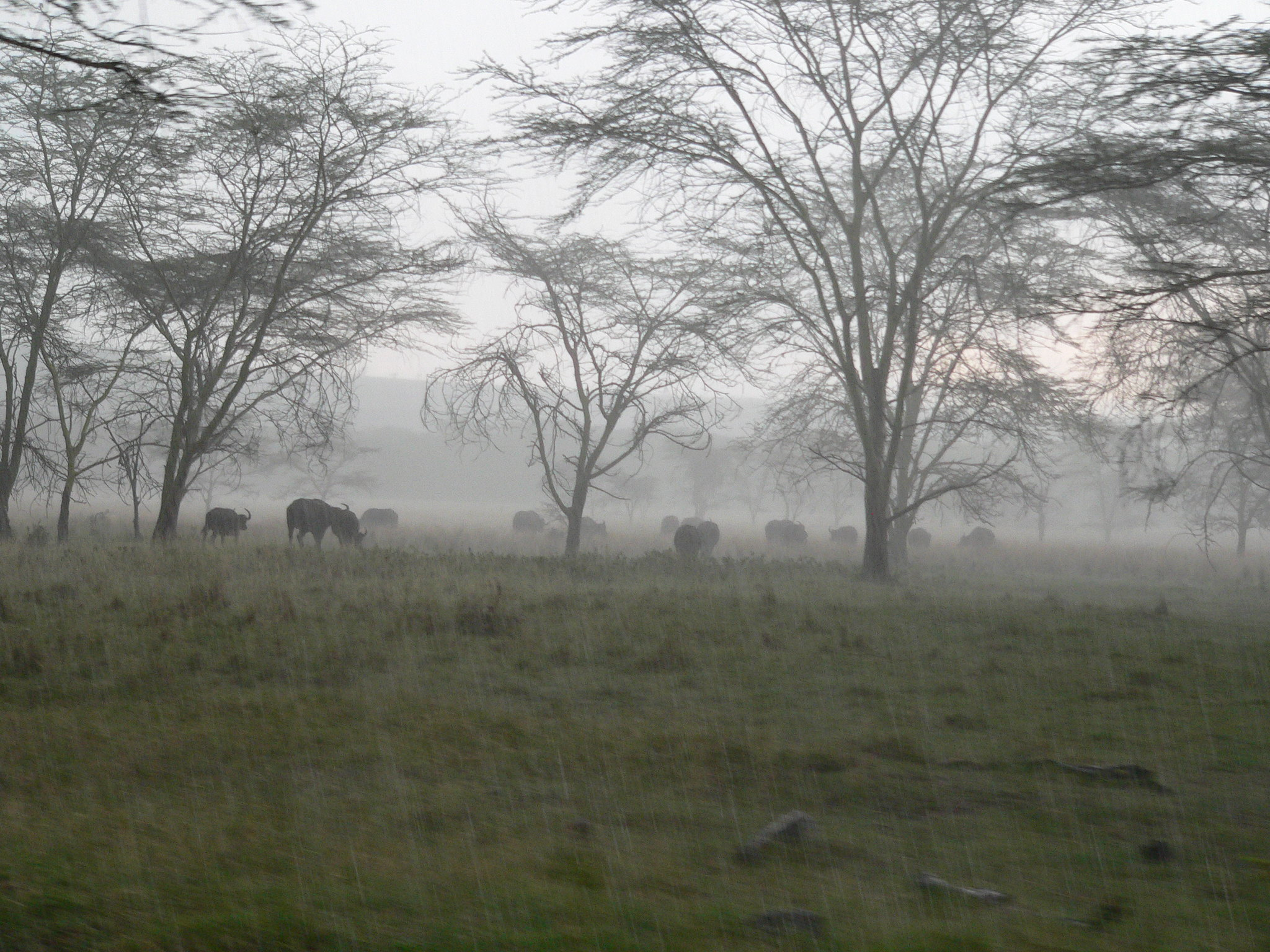 East African Rains