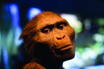 A realistic reconstruction of Lucy from a Houston Museum of Natural Science exhibit.