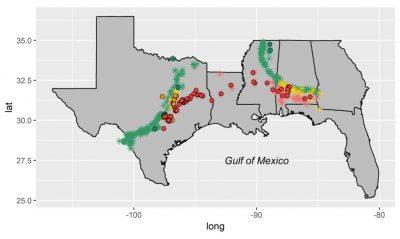 Gulf Coast Mollusk Fossil Site