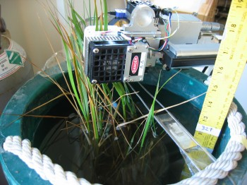 Plant Gas Analyzer Attached to Cordgrass Leaf