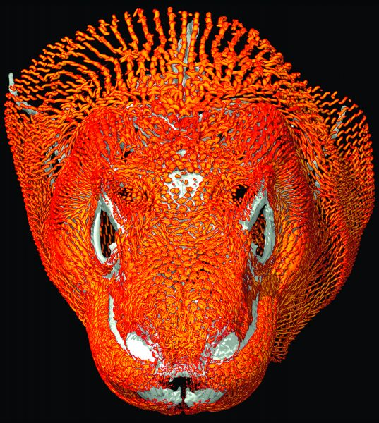 Komodo Head In Color
