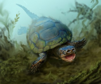 This is an artist's interpretation of the turtle Arvinachelys goldeni as it would have appeared l76 milion years ago in southern Utah.