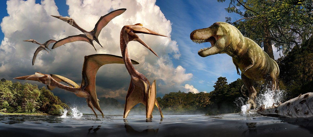 Texas Pterosaur Flies into Spotlight this National Fossil