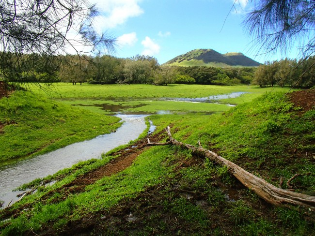 A view of the headwaters of Waianaia Gulch on the wet-side, which terminates at a cinder cone, known in Hawaii as a pu'u. Brendan Murphy.