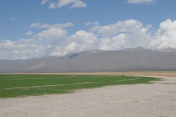 In the mid 1990s, Mexico's largest dairy, bought land in the Ocampo Valley north of Cuatrociénegas and drilled deep water wells to irrigate fields of alfalfa for their cattle. Some scientists and conservationists think the valley's drying out is related. Photo: Marsha Miller