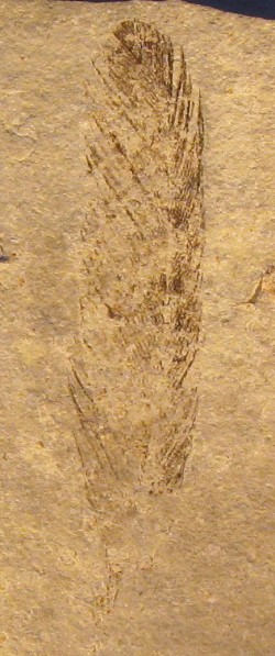 Archaeopteryx had (some) black feathers