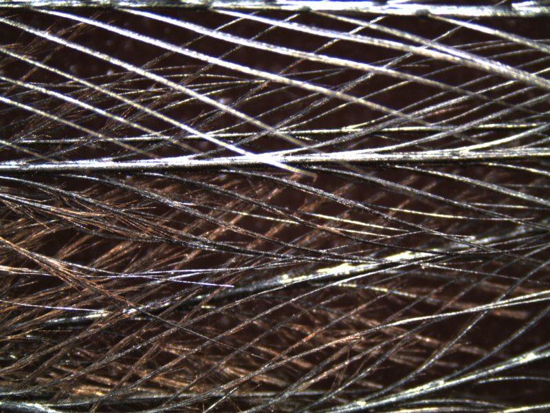 Cassowary Closeup