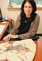Julia Clarke studies the origin and evolution of birds and related dinosaurs.