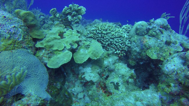Mixed coral assemblage near reef margin