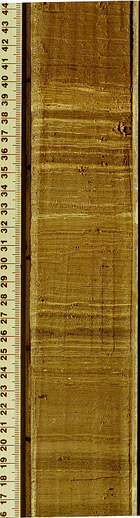 Sediment core taken from Lake Bosumtwi, Ghana displaying annually deposited layers. These layers provide a high-resolution chronology for the sediments and a means of reconstructing past climate variations. Photograph by T.M. Shanahan and W. Wheeler.
