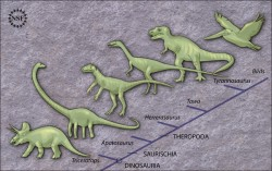 Analysis of Tawa and other early dinosaurs suggests that dinosaurs originated in what is now South America and soon after diverged into ornithischians (like Triceratops), sauropodomorphs (like Apatasaurus) and theropods (like T. rex). The theropods evolved into modern-day birds. Credit: Zina Deretsky, National Science Foundation.