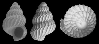 Fossil Shells Reveal How Ancient Animals Survived Global Warming