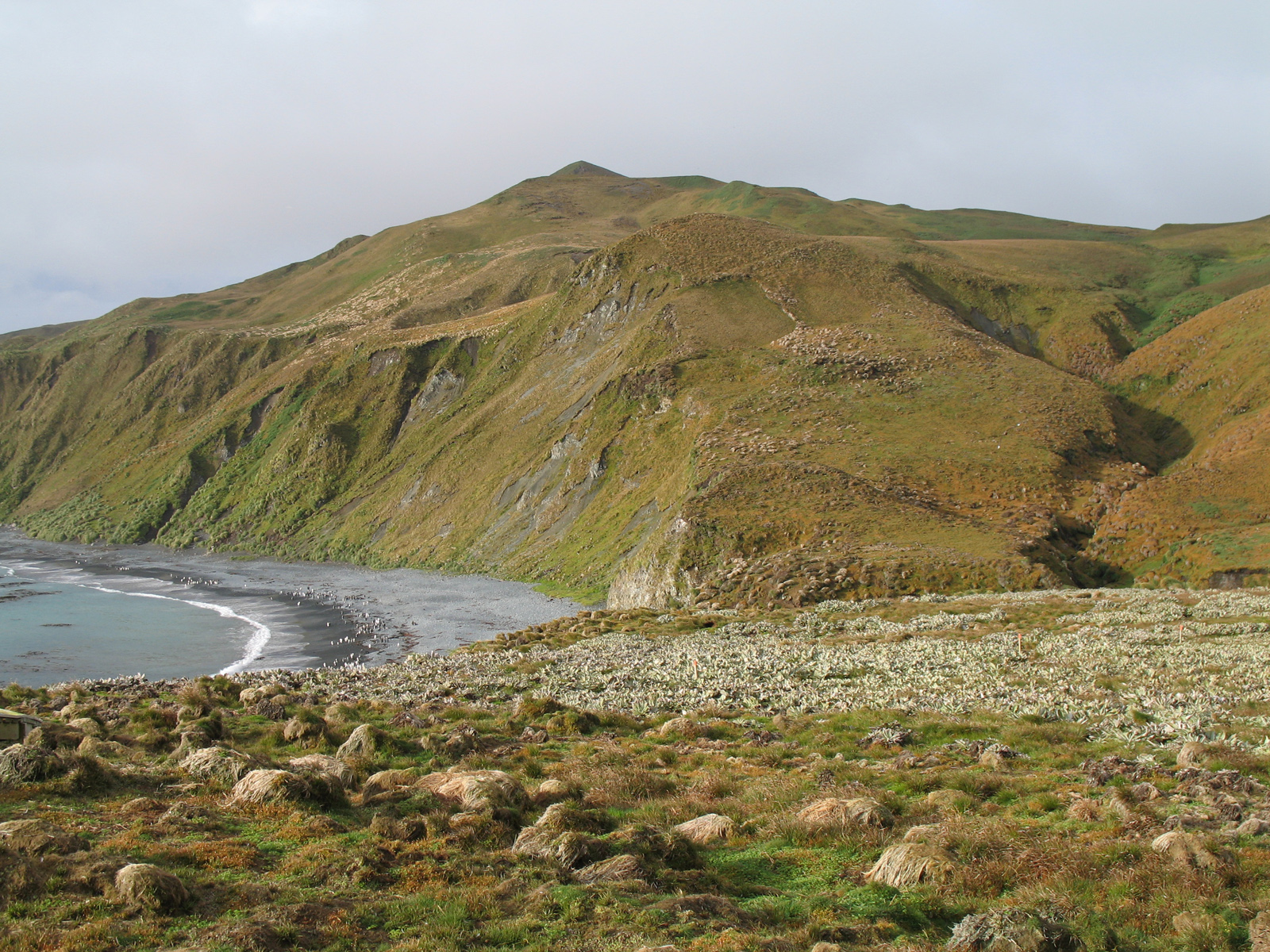 how to get to macquarie island