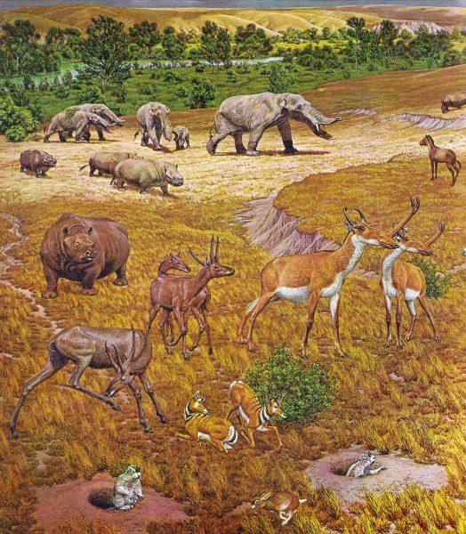 N.american Fauna