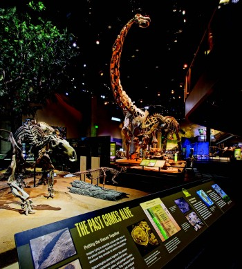 The long-necked Alamosaurus towers above other dinosaur exhibits at the Perot Museum of nature and science. Mark Knight Photography.