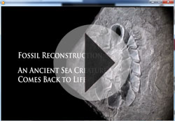 Video - Prehistoric Movie Monster Mollusk Re-created with 3D Printer