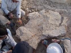 Inkayacu fossil slab