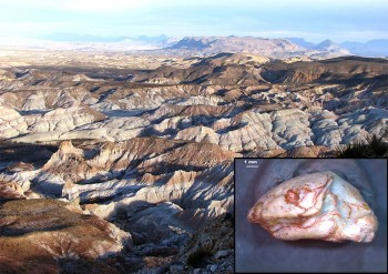 UT Researchers: Ancient 'Lone Star Lizard' Discovered in West Texas