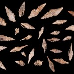 Flock of marine snails
