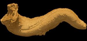 3D model of Caprinuloidea perfecta