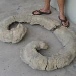 71. Titanosarcolites, the Bevo of all rudists!