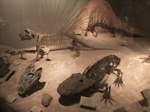Fossils in the Hall of Geology and Paleontology at Texas Memorial Museum