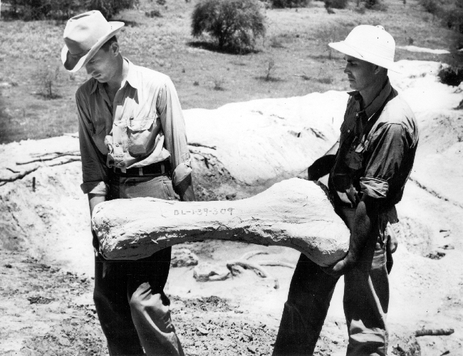 Glen Evans (left) who managed much of the WPA effort to collect Texas fossils.